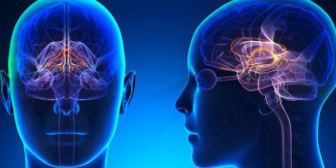 آیا دوپامین در میزان واکنش به خطر موثر است؟