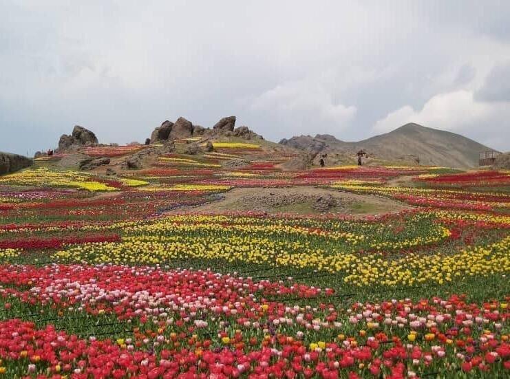 نشاط گل ها در دامان طبیعت زیبای کندر